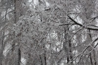 las_w_lodzie 010