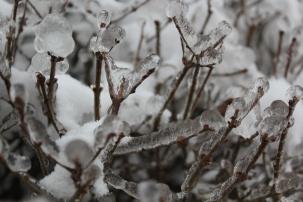 las_w_lodzie 099