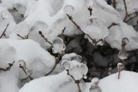 las_w_lodzie 119